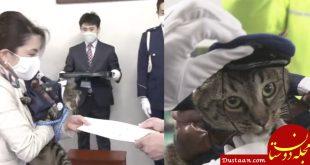 گربه ای که به استخدام پلیس درآمد! +عکس