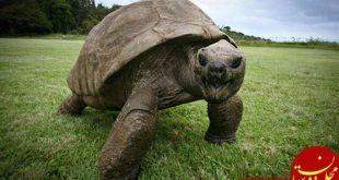 پیرترین حیوان روی خشکی با 188 سال عمر! +عکس