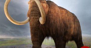 آیا میشود دایناسورها و حیوانات منقرض شده را دوباره زنده کرد؟