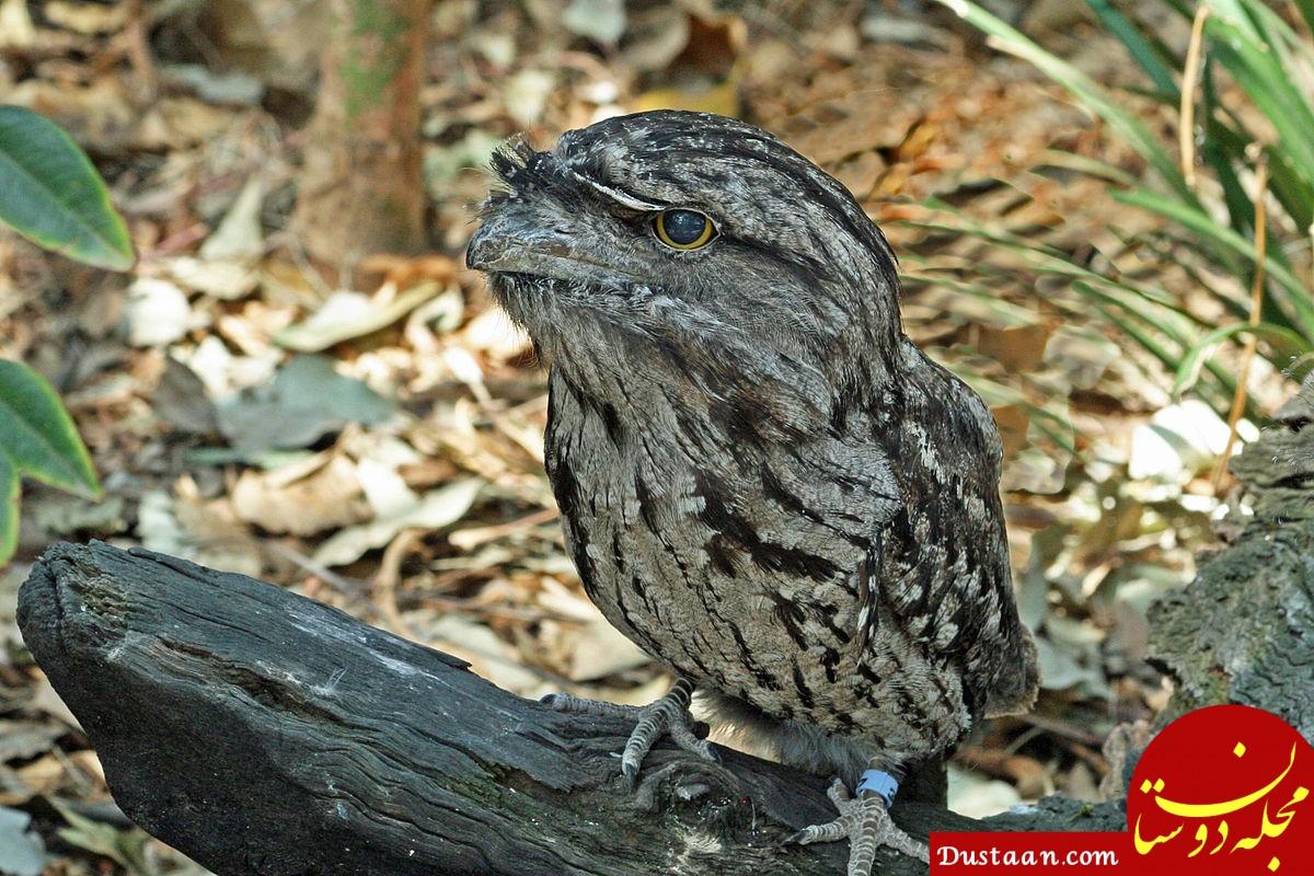 محبوب ترین پرنده در اینستاگرام!