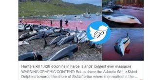 بزرگترین قتل عام دلفین ها