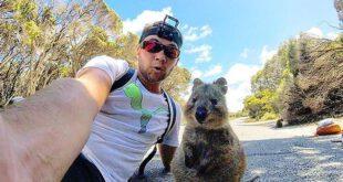 کوئوکا یکی از جانداران بومی استرالیا است. در جزایر کوچک نزدیک به کرانه استرالیای غربی، به ویژه جزیره روتنست...