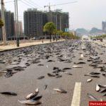 پدیده عجیب بارش ماهی در هندوراس! +فیلم و عکس