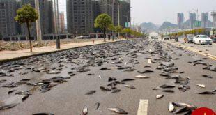 از سال ۱۹۹۸ هر ساله در هندوراس طی زمانی خاصی ماهی زنده می بارد. مردم ماهی ها را جمع کرده و با آنها غذا می پزند...