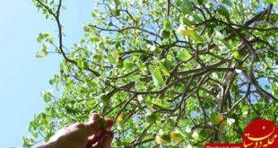 نیکولا استرکلند رادیولوژیستی است که تعطیلاتش در جزایر کارائیب در سال ۱۹۹۹ به واسطه درختی مرموز و سمی به جهنم ت...