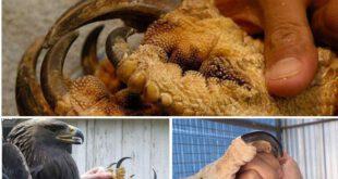 عقاب هارپی نوعی عقاب است که نیرومندترین و بزرگترین پرندهٔ شکاری قارهٔ آمریکا به شمار میرود که گاهی به انسان ب...